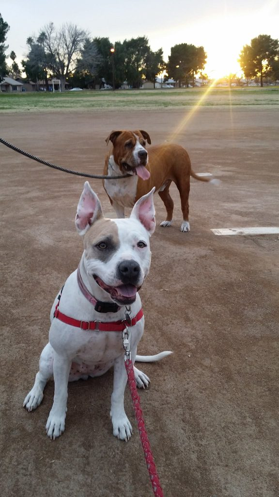 The Cutest Dogs in Phoenix are Bowzer and Satori